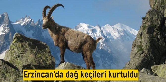 Erzincan'da dağ keçileri kurtuldu Yurt Gazetesihttps://www.yurtgazetesi.com.tr/guncel/erzincan-da-dag-kecileri-kurtuldu-mahkemeden-yurutmeyi-durdurma-h160912.html Yurt Gazetesi