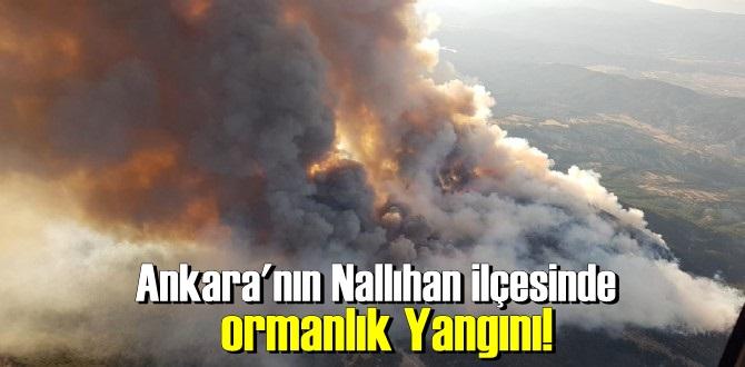 Nallıhan ilçesinde ormanlık Yangını