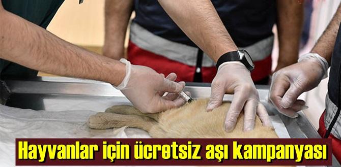 kedi ve köpekler için ücretsiz kuduz aşısı kampanyası