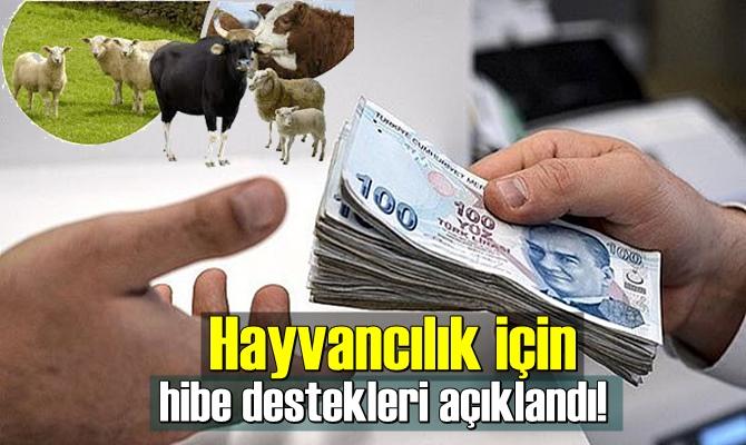 Cumhurbaşkanı Erdoğan imzalı yeni bir destekleme kararı Resmi Gazete'de yayımlandı.